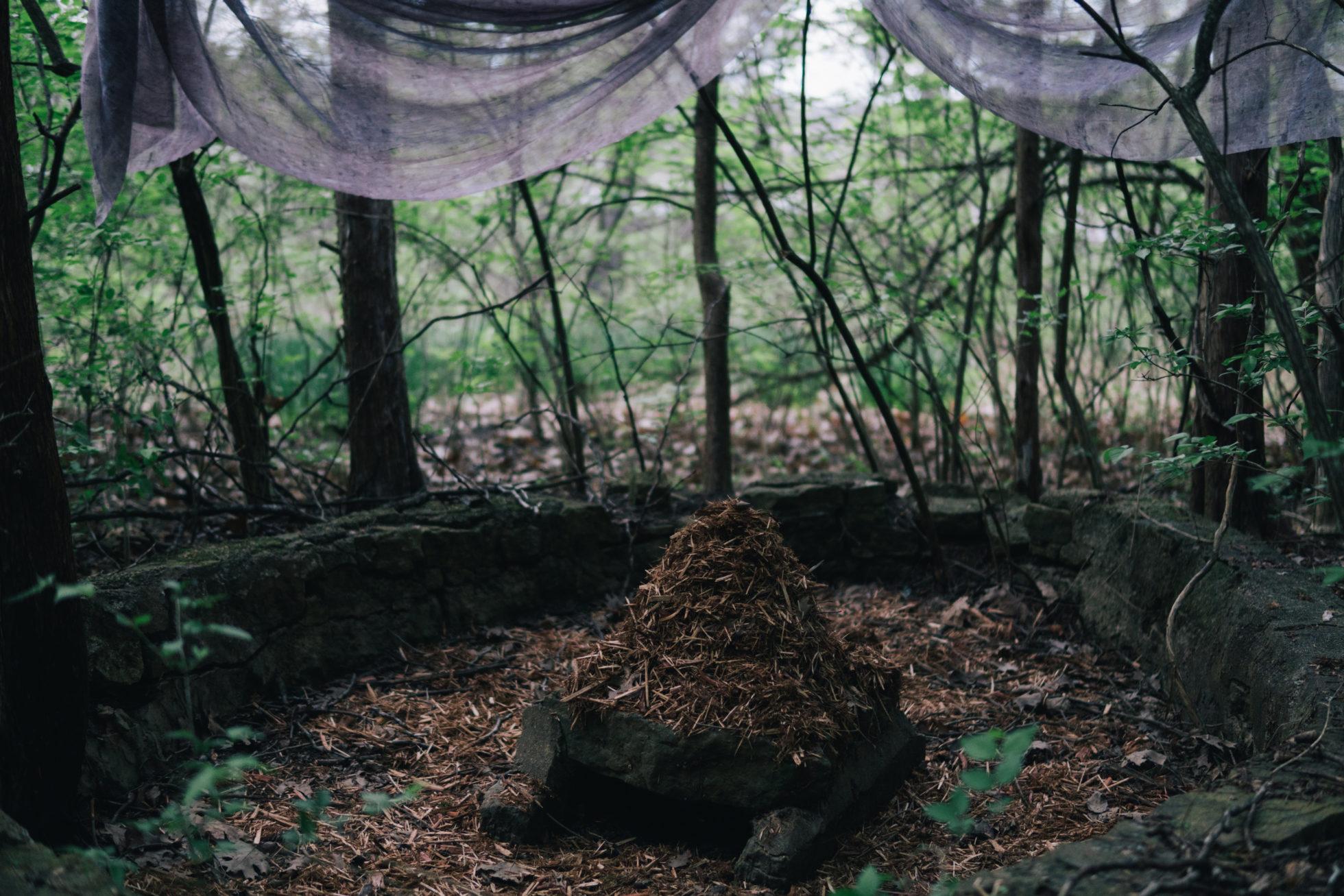 Dreaming Under a Cedar Tree_photo by Sophia-Odelia Bauer 2017