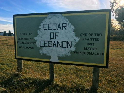 A Page in History: Cedars of Lebanon