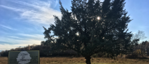 Fadi Boukaram - Cedars of Lebanon